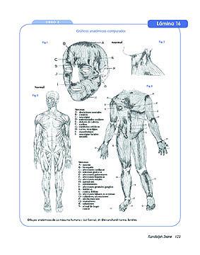 terapia de polaridad ejercicios energeticos pdf